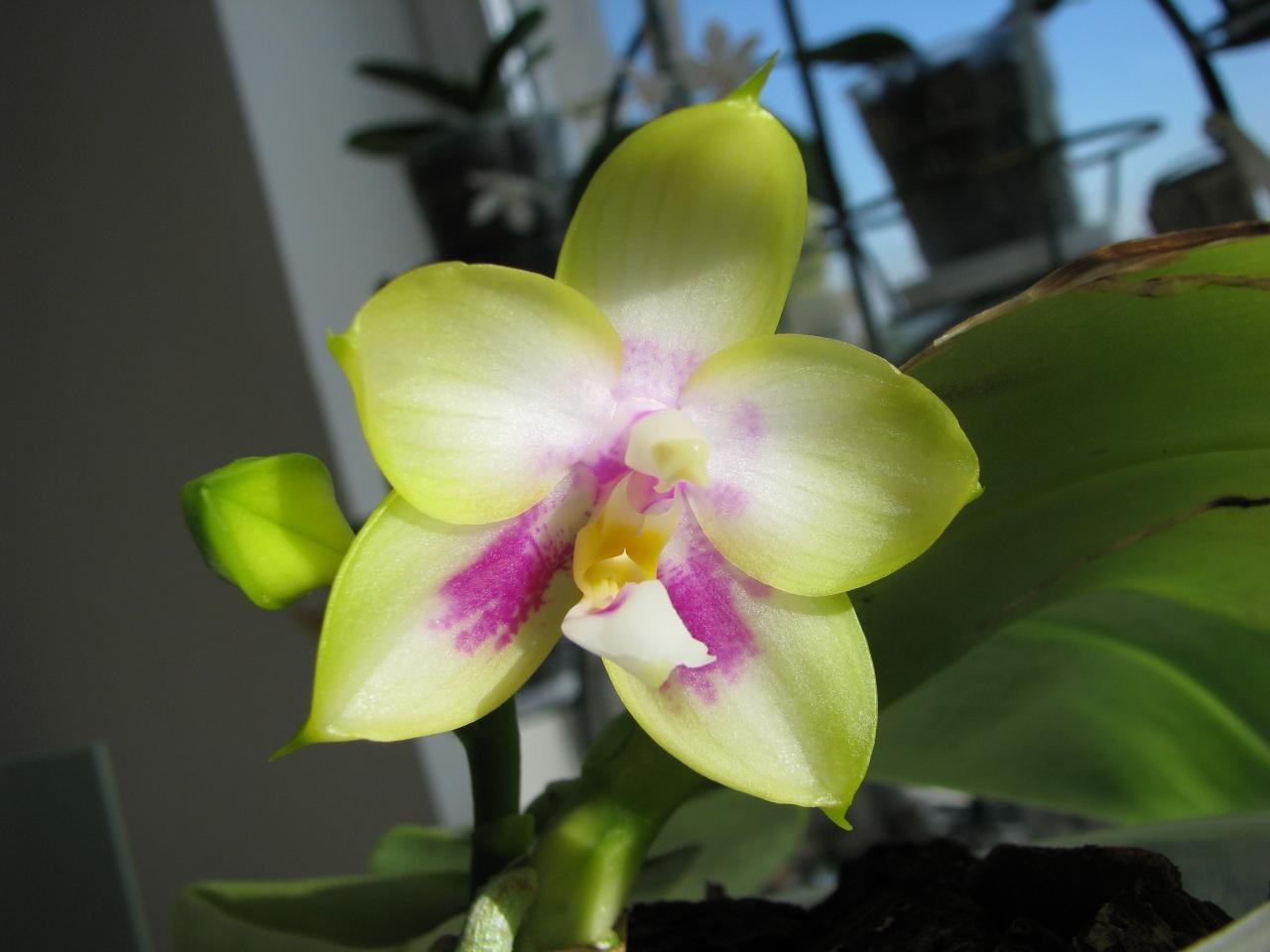 слову, город орхидея канари фото время стоит